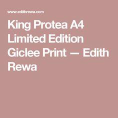 King Protea A4 Limited Edition Giclee Print — Edith Rewa