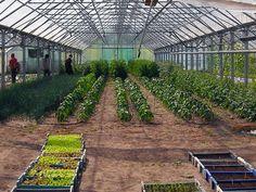 Combaterea bolilor si daunatorilor in spatii protejate Colorado, Solar, Gardening, Plants, Aspen Colorado, Lawn And Garden, Plant, Skiing Colorado, Planets