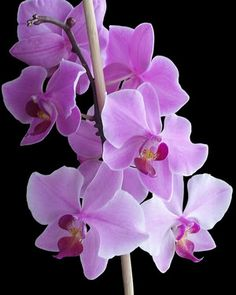 1000 Images About Orchids On Pinterest Orchid Plants