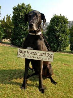 Pregnancy Announcement with Dog!  Custom wording! Pregnancy Announcements, Creative Pregnancy Announcement, Pregnancy Photos, Guard Dog, Maternity Pictures, Baby Pictures, Baby Photos, Dog Baby, Cute Babies
