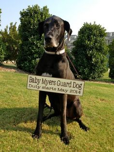 Pregnancy Announcement with Dog!  Custom wording! @Betsy Buttram Buttram Smith (not that you need it ... yet ... but thought this was super cute)