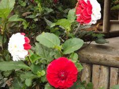 Flores em meu jardim 3