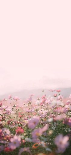 Ideas wall paper pink flowers photography for 2019