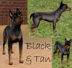 "MinPin for the video game ""The Sims"""