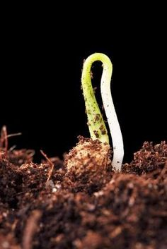 How to Make your Own Vegetable Seed Starting Soil