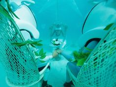 """Bora Bora Underwater Wedding"", One of the Most Unique Wedding Ceremonies in the World, Launches in the Islands of Tahiti. BORA BORA, Tahiti (October 21st, 2014) – Today marks the launc…"