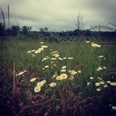 let your wildflowers bloom Wildflowers, Barns, Countryside, Nativity, Wanderlust, Bloom, Let It Be, Instagram Posts, Plants