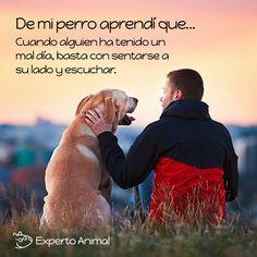 Tenemos tantas cosas que aprender de ellos... #FrasesAnimales #FrasesAnimalesdeAmor #FrasesdePerros #CuriosidadesAnimales #Perros #AmorPerruno