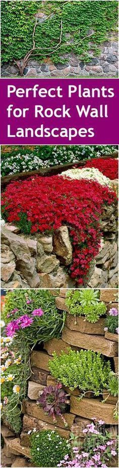 Rock wall landscaping, landscape with a rock wall, DIY landscaping, popular pin, outdoor landscaping, outdoor design, gardening hacks