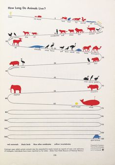Freaky Fauna's Tumblr - How Long Do Animals Live? Illustration by Gerd...
