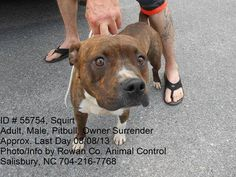 ADOPTED!!! *Last Adoptable Day 8/8*  ID# 55754 - Squirt is a handsome young male Pitbull (American Staffordshire Terrier) mix. He was owner surrendered  Squirt is a friendly guy. Roughly 2 yrs old and weighing around 45-50lbs. Adoption fee $70 - goes towards neuter and 1 yr rabies vaccine. Rowan Cty Shelter (Salisbury, NC) 704-216-7768  https://www.facebook.com/photo.php?fbid=568739476500932=a.568739459834267.1073742433.331561090218773=1_count=1