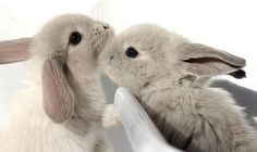 RT @bunnybuddhism: A successful bunny must never forget the spirit of the beginner.