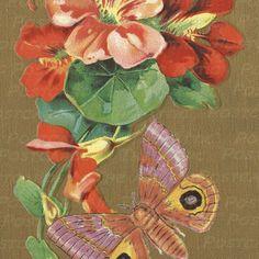 Beautiful Vintage Nasturtium Flower and Butterfly 600 DPI Digital Hand Designed Art Scrapbooking, Card Making + Craft PRINTABLE DOWNLOAD