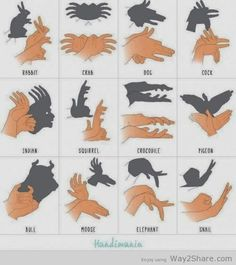 Guide to making animal shadows | FunnyHappy
