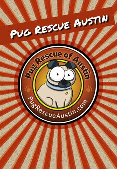 Pug Rescue of Austin -- just in time for National Dog Day!