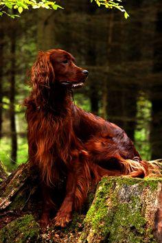 Samson in het bos