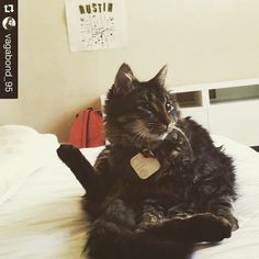 Meow - #Repost @vagabond_95  Interrupted Poser that was cleaning his crotch  P.S. That #tileit around his neck saved my butt every time he mad dash for the door when I come home.  #tileapp #catstagram #pettech #tiledit  www.thetileapp.com