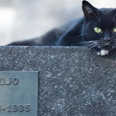 BLACK CAT ON CEMETERY