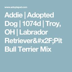 Addie | Adopted Dog | 1074d | Troy, OH | Labrador Retriever/Pit Bull Terrier Mix