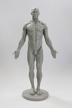 Review: 3D Total Male Anatomy Figure | Blender Cookie