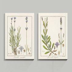 Heines Lavender Stretched Canvas
