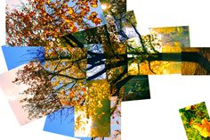 Practice Photomontage – Autumn Trees | matthew12photoym