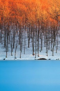 Look how beautifully the trees contrast with the water. (via 500px / Blue Sky in Ice by Dreamerlandscape.com)