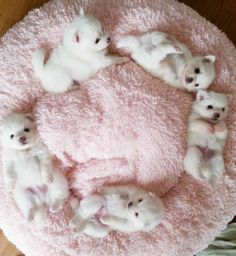 ♤cães - Circle of Puppies Cute Baby Animals, Animals And Pets, Funny Animals, Wild Animals, Cute Puppies, Cute Dogs, Dogs And Puppies, Doggies, Westie Puppies