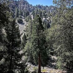 """Went for a wonderful walk up icehouse Canyon with my future son-in-law David. Hiked my personal best. Never too soon to train for my next """"Israel"""" trip!"""