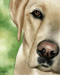 Yellow Labrador Watercolor Painting