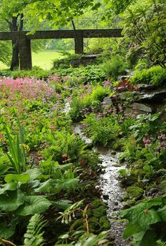 primroses Moss and ferns and stones and bog plants.Moss and ferns and stones and bog plants. Backyard Stream, Garden Stream, Bog Garden, Forest Garden, Garden Shrubs, Woodland Garden, Garden Cottage, Shade Garden, Dream Garden
