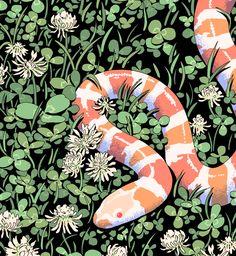 milk snake by choo Pet Anime, Anime Art, Pretty Art, Cute Art, Animal Drawings, Art Drawings, Milk Snake, Illustration Art, Illustrations