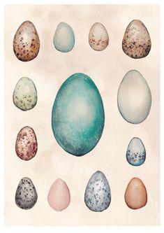 Items similar to Art Print. Scientific Eggs Study in Watercolour. Eggs of Australian Birds on Etsy Pastel Background, Australian Birds, Botanical Prints, All Print, Fine Art Prints, Watercolor, A5, Illustration, Artwork