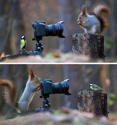 Russian photographer captures the cutest squirrel photo session ever.