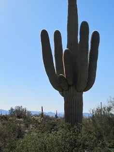 On the Road to Sells, Arizona