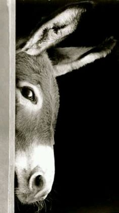 Such great animals... x  Peekaboo!
