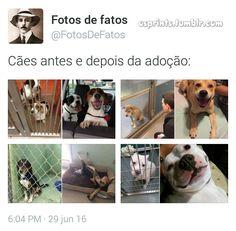 Cães antes e depois de serem adotados