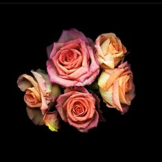 Kate Scott flower photography