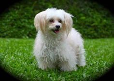 Looks a little like Gertie!!