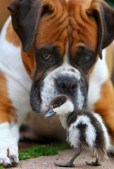 5 Family Friendly Dog Breeds, lets see how many you already knew!