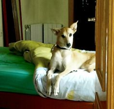 BRUNO - 93 412 00 73 - Barcelona - Macho - Nacido en 2010 - 30 kg. - Divorcio, no lo quiere y lo llevan a perrera - Se lleva bien con perros, gatos y niños. Es bueno,simpático, obediente.