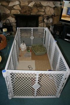 The Bunny Guy Rabbit Living Arrangements - House Rabbits - Indoor Bunnies