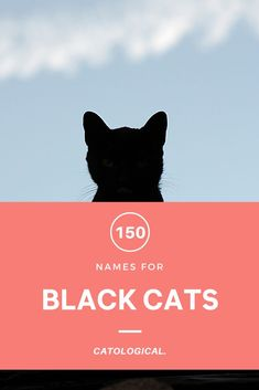 Well known for their attachment for witchy characters, find the perfect name for your little ball of night! #CatNames #CatIdeas #CatTips #CatLovers #CatNameList Names For Black Cats, Grey Cat Names, Cute Cat Names, Grey Cats, White Cats, Unique Cat Names, Cats Are Assholes, Kitten Care, Inspirational Celebrities