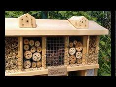 Eine Ameise und einige  Wildbienen richten Ihre Zimmer gerade in einem Insektenhotel ein.