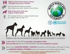 World Rabies Day - September 28, 2016 marks the 10th World Rabies Day, a milestone in rabies prevention. Since it began in 2007, the rabies community have aligned to make World Rabies Day a global phenomenon. In that time, its life-saving rabies prevention messages have reached millions of people in over 100 different countries. This year's theme is Rabies: Educate. Vaccinate. Eliminate. http://www.who.int/rabies/WRD_landing_page/en/