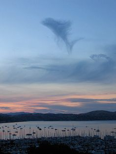 Dolphin leaping, Sausalito, California. At the Cloud Appreciation Society, we love finding shapes in the clouds, and we think everyone should do more of it. Dinosaurs, dragons … you name it, we've got it  Photograph: David R Holbrooke