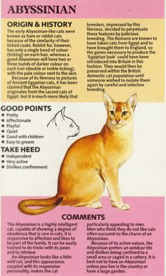 Fun Facts About Cats, Cat Facts, Abyssinian, Cute Little Animals, Cat Breeds, Knowledge, Posters, Drawing, History