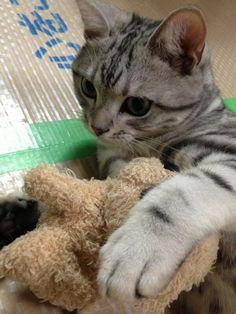 Kitty's toy dog