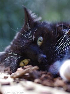 """""""Shhh,I'm listeningto the ants!""""  Photo by ©Aymon Roche"""