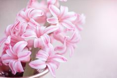 花, 风信子, 粉红色的花, 粉色风信子, 鲜花, 粉色的花, 香花, Schnittblume, 春天的花